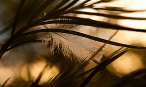 Light as a Feather II