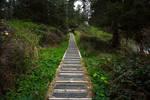 Forest Walkway Uphill Horizontal
