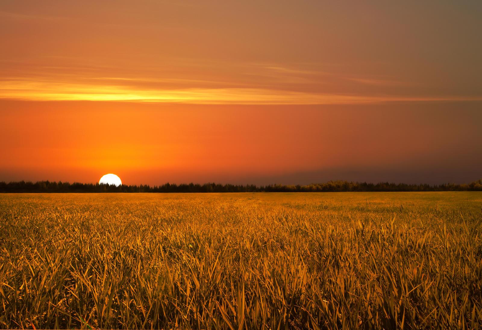 Golden Field Sunset Stock by leeorr-stock on DeviantArt