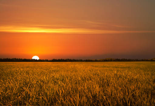 Golden Field Sunset Stock