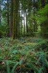Rainforest Grove Stock