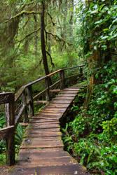 Leeorr-stock -8552 Wooden Walkway