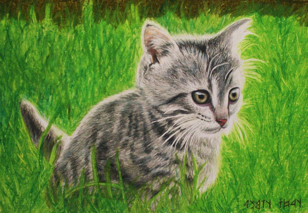 Kitty by tacsitimea