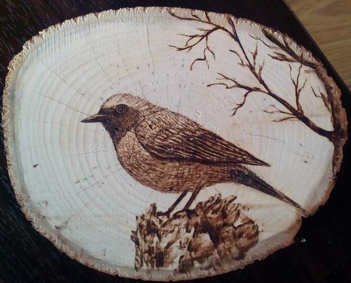 Birdie by tacsitimea