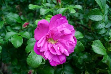 Pretty Flower by Garret-B