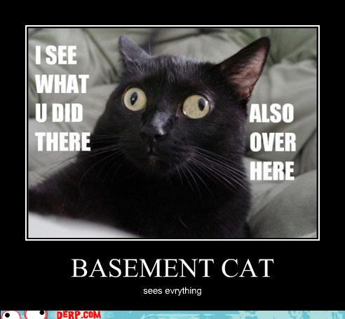 basement cat sees all by cynically depressed on deviantart