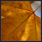 Autumn II by WorldOfIllusion