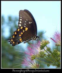 Butterfly 3-1
