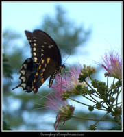 Butterfly 3-2 by Sammykaye1sStamps