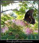 Butterfly 3-4