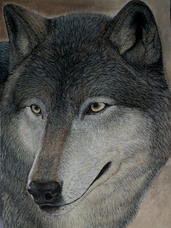 Wolf Study in Acrylics by SoulCanvas
