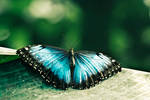 a blue butterfly by BananaJ0e