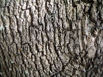 Bark by caca-stock