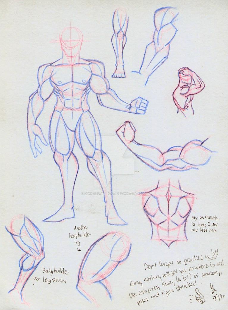 Anatomy Study Sketches by GiantPurpleCat on DeviantArt