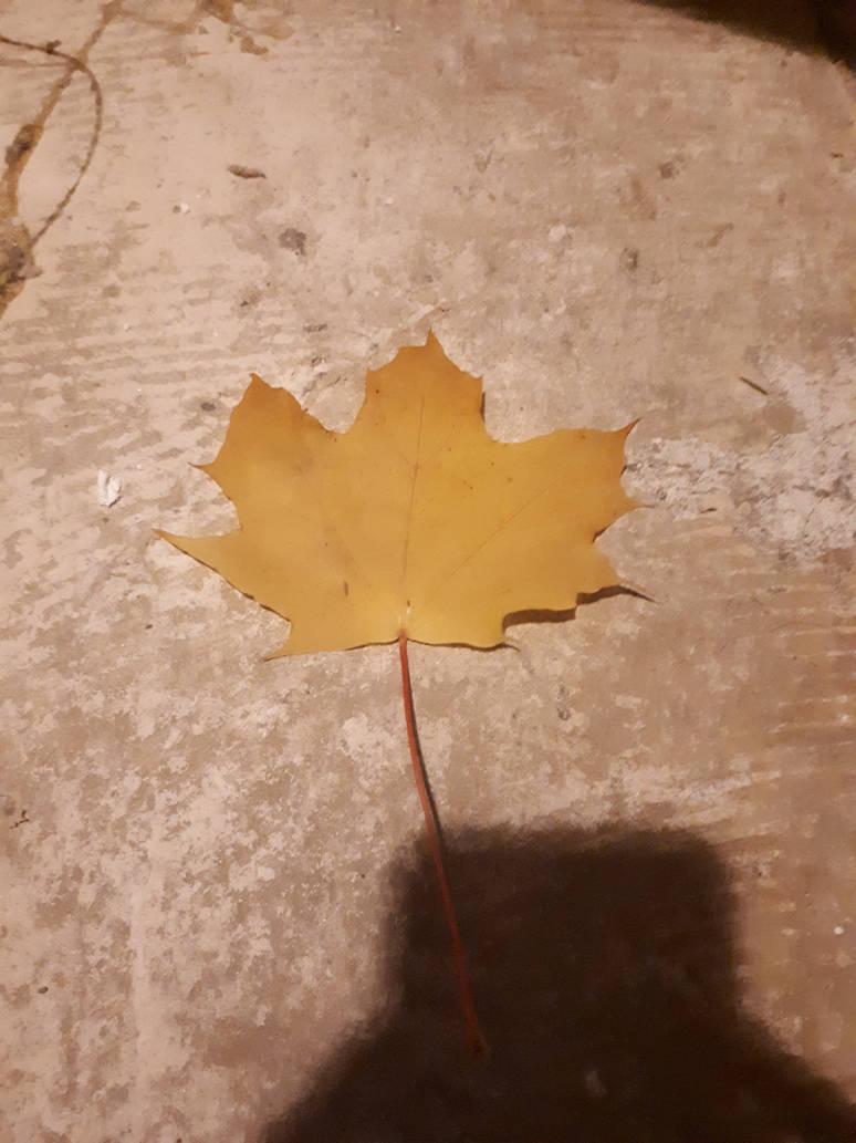 Leaf by MK-Fighter