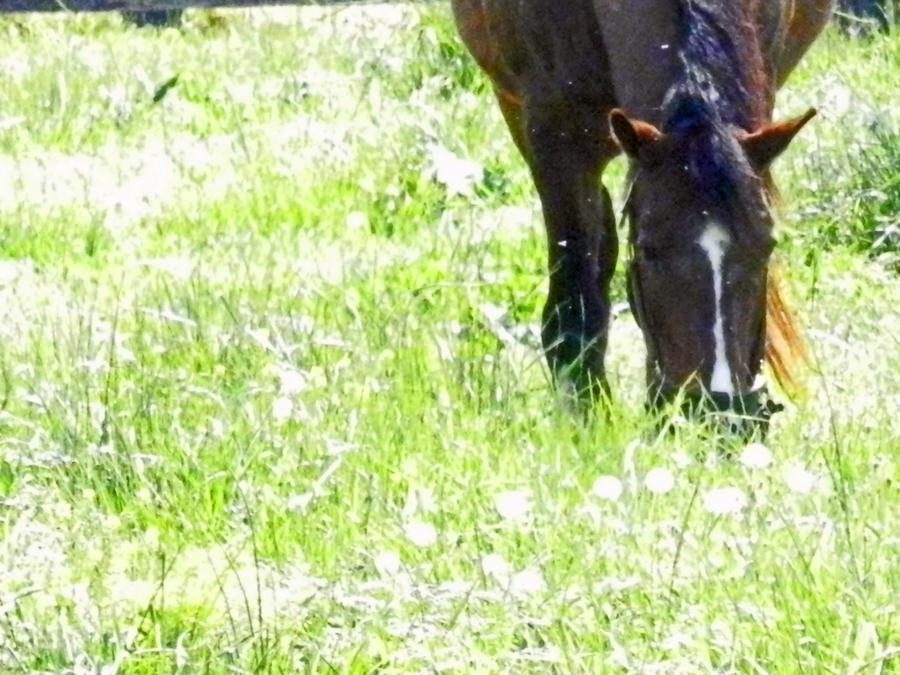 Horse Graze by Kotaslaw