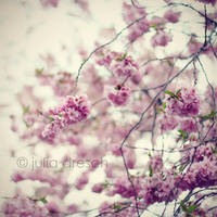 vintage blossom by chulii