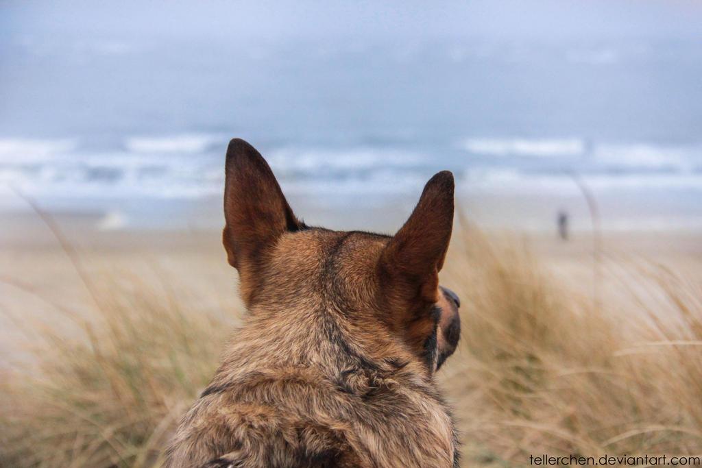Love the beach by Tellerchen