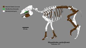 Megadolodus by Zimices