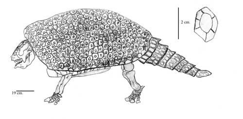 Boreostemma gigantea by Zimices