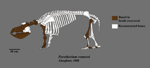 Pyrotherium skeleton by Zimices
