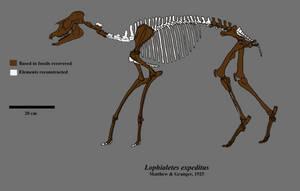 Running tapir, hidden perissodactyl by Zimices