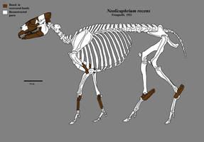 Neolicaphrium skeleton by Zimices