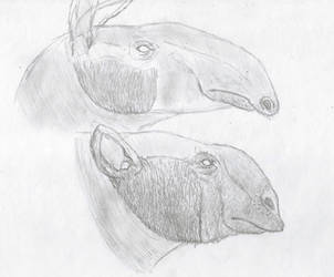 Miocene big noses by Zimices