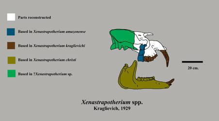 Xenastrapotherium skull