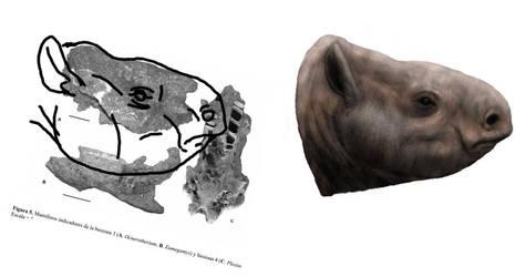 Ocnerotherium head