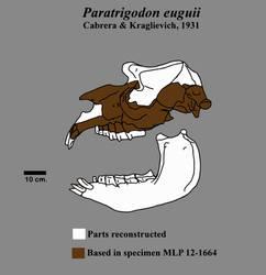 Paratrigodon