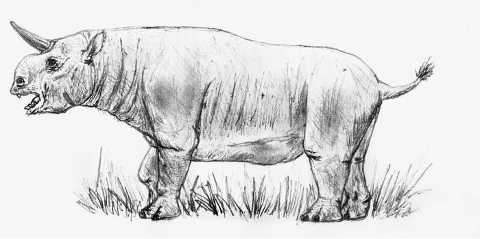 Paratrigodon1