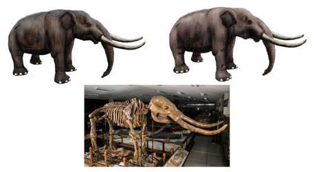 Notiomastodon, Andean elephant
