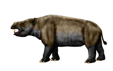 Falcontoxodon