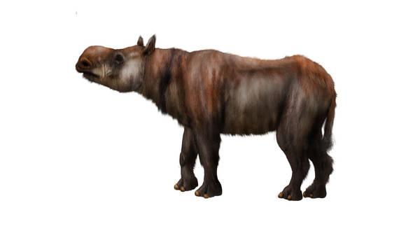 Plesiaceratherium sp.