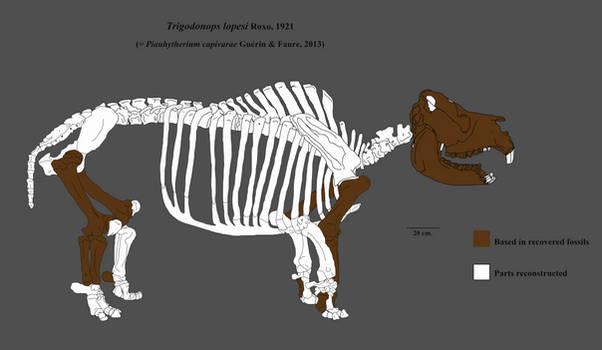 Trigodonops