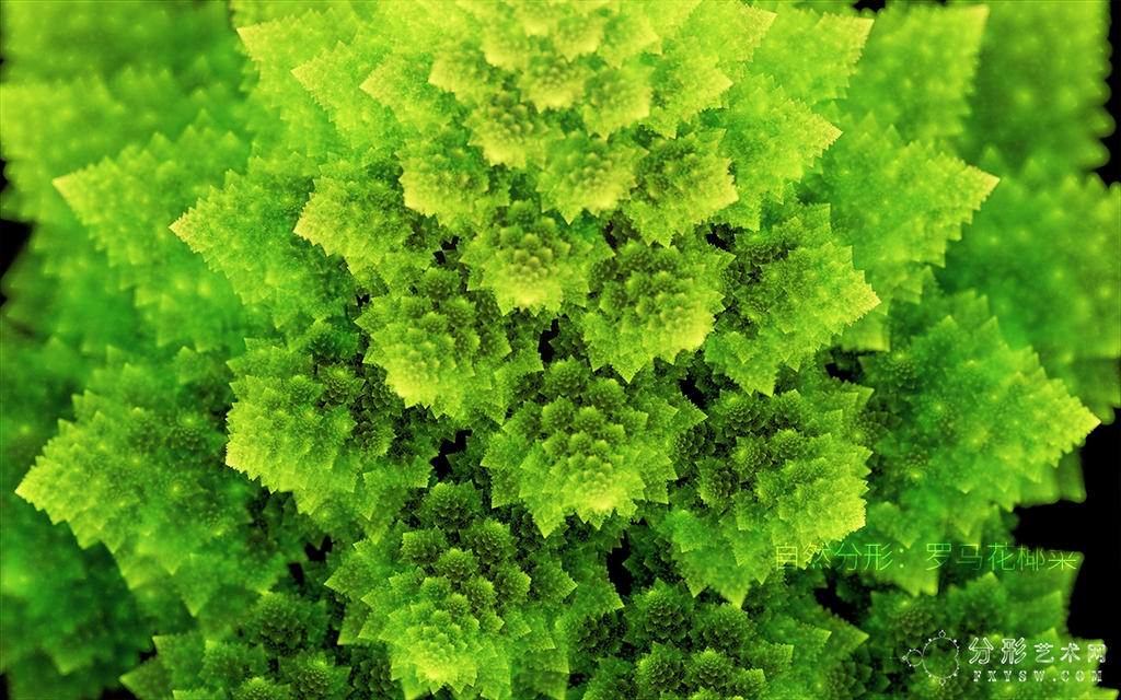 Romanesco broccoli by fengda2870