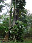 Jardim Botanico RJ 06-11-08 08