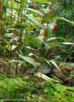 Jardim Botanico RJ 06-11-08 18