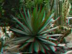 Jardim Botanico, RJ 07JUN09 20