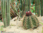 Jardim Botanico, RJ 07JUN09 28