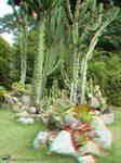 Jardim Botanico, RJ 07JUN09 30