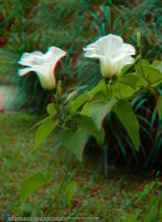 Jardim Botanico, RJ 07JUN09 65