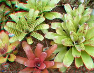Jardim Botanico, RJ 07JUL09 04