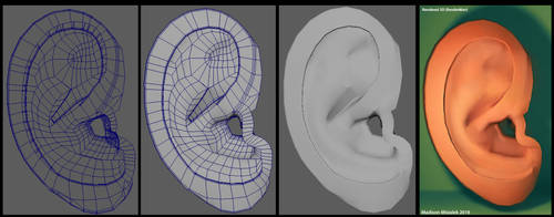 3D Ear Model Practice by ThatxDamnxGirl