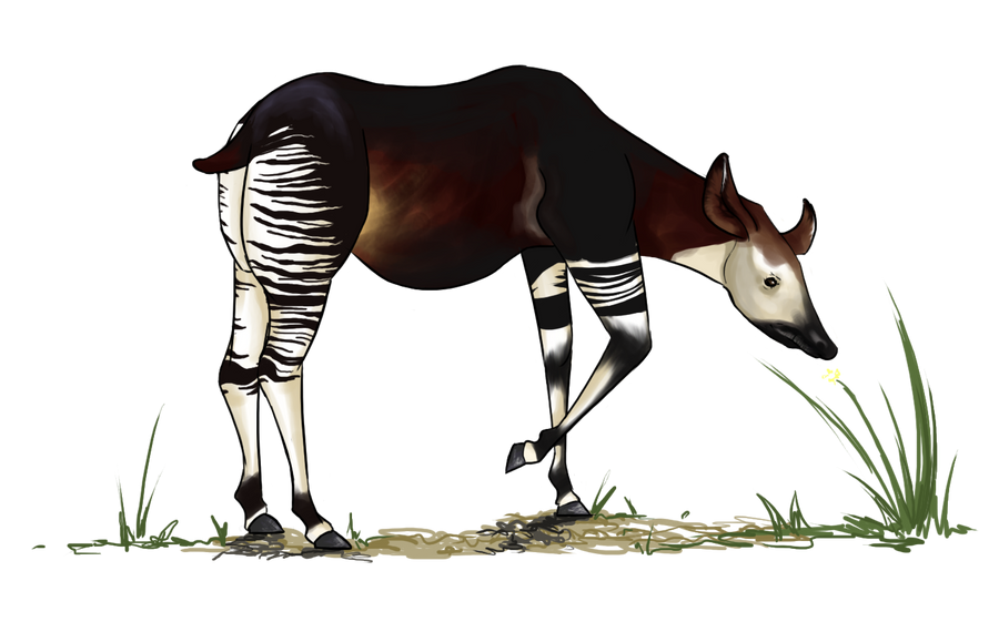 Request okapi by loonalily on deviantart for Okapi coloring page