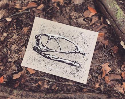 Dinosaur Skull - Dimorphodon