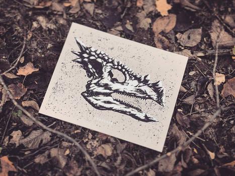 Dinosaur Skull - Dracorex