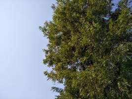 Tree Cut 01 by shiajafari