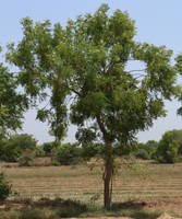 Tree 01 by shiajafari